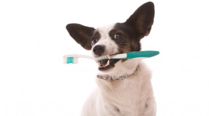 Doggie Dental Health: Infographic