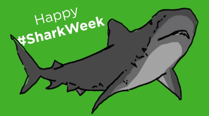 All About Shark Teeth for Shark Week!